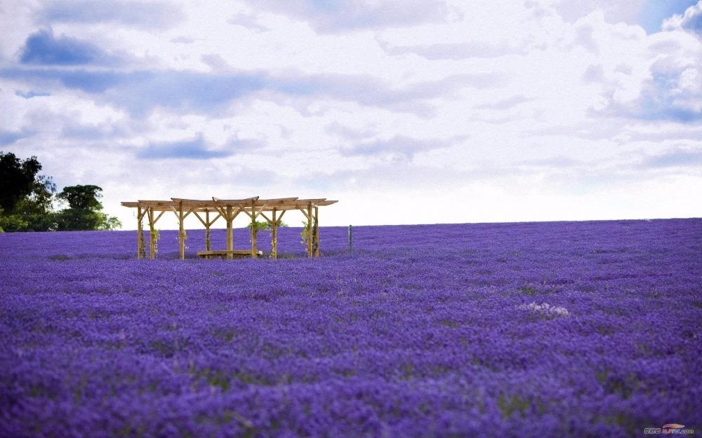 Ngỡ ngàng vẻ đẹp thiên đường hoa mùa hè chỉ mở cửa 7 ngày mỗi năm - 7