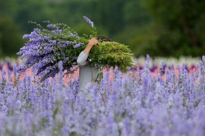 Ngỡ ngàng vẻ đẹp thiên đường hoa mùa hè chỉ mở cửa 7 ngày mỗi năm - 5