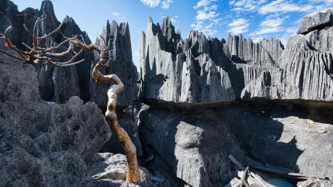 Kỳ quan rừng đá ít người có thể tới ở Madagascar - 1