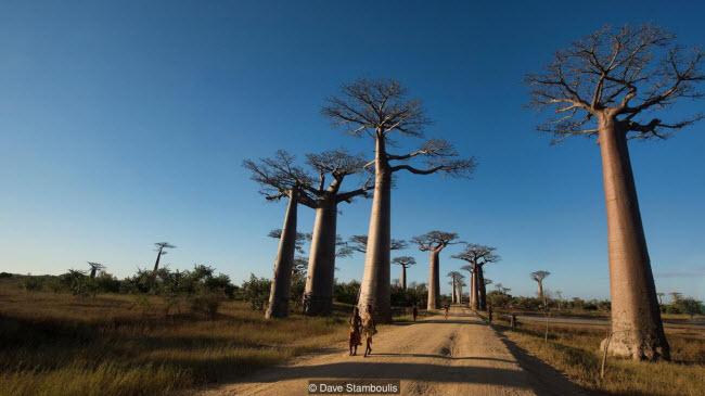 Kỳ quan rừng đá ít người có thể tới ở Madagascar - 4