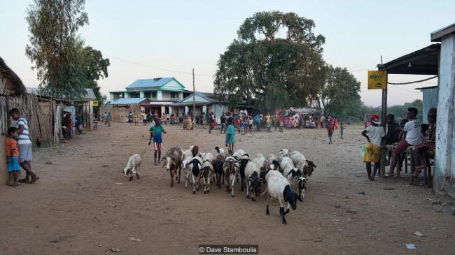 Kỳ quan rừng đá ít người có thể tới ở Madagascar - 5