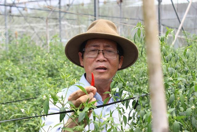Chuyện lạ có thật: Thu chục tỷ đồng mỗi năm nhờ trồng ớt...lấy hạt - 1