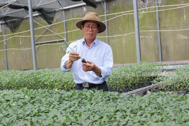 Chuyện lạ có thật: Thu chục tỷ đồng mỗi năm nhờ trồng ớt...lấy hạt - 3