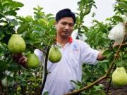 Thị trường - Tiêu dùng - Trồng cây gì để làm giàu: Chăm vườn ổi lê khiến ai cũng mê