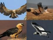 """Phi thường - kỳ quặc - 10 loài chim bay cao nhất, """"đua"""" cả với máy bay"""