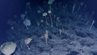 Thả camera sâu 2.300 mét, phát hiện cảnh tượng bất ngờ