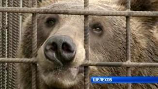 Nga: Vào chuồng gấu cho ăn, ra được thì đã mất cánh tay