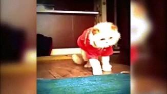 """Clip mèo """"quẩy"""" theo nhạc cực ngầu hút triệu lượt xem"""