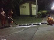 Thế giới - Trăn khổng lồ 8m đớp chân, siết chặt bà cụ Thái Lan