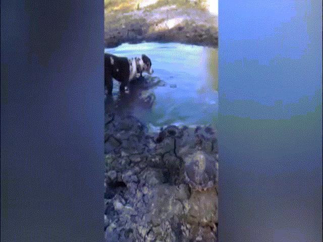 Ném chó mèo sống xuống hồ cho cá sấu đớp ở Colombia - 2