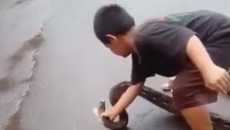 Bé trai Indonesia đem mạng sống ra giỡn trước mõm rắn khổng lồ