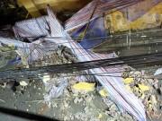 HN: Tường trường tiểu học bất ngờ đổ sập trong đêm