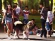 Từ tháng 9, quy định mới người nuôi chó phải biết