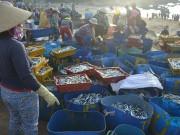 Thị trường - Tiêu dùng - Bình Định: Ngư dân Nhơn Lý trúng đậm cá nục