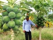 Thị trường - Tiêu dùng - Làm giàu ở nông thôn: Trang trại tổng hợp, nuôi con, trồng cây gì cũng lãi khá