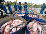 Thị trường - Tiêu dùng - Cá tra vào Trung Quốc: Mừng một lo mười!
