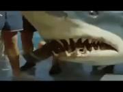 """Video Clip Cười - Clip: Bắt cá kiểu """"nghìn cân treo sợi tóc"""""""