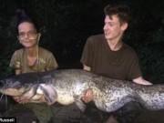 Thế giới - Mỹ: Cá trê khổng lồ suýt kéo ngược cần thủ xuống nước