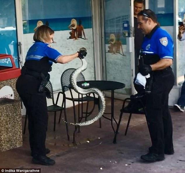 Trăn khủng khiến cảnh sát nam sợ hãi, cảnh sát nữ lao vào tóm sống - 3