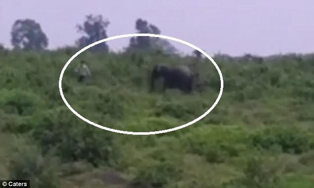 Video: Uống rượu say lại gần voi chụp ảnh và cái kết bi thảm - 1
