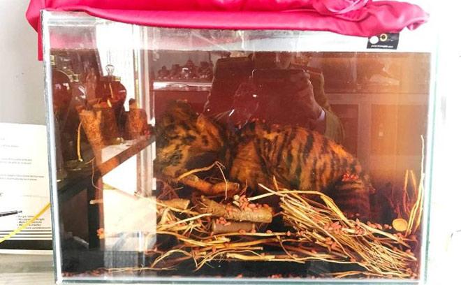 Ngâm cả con hổ trong bể rượu để làm... quà biếu - 1