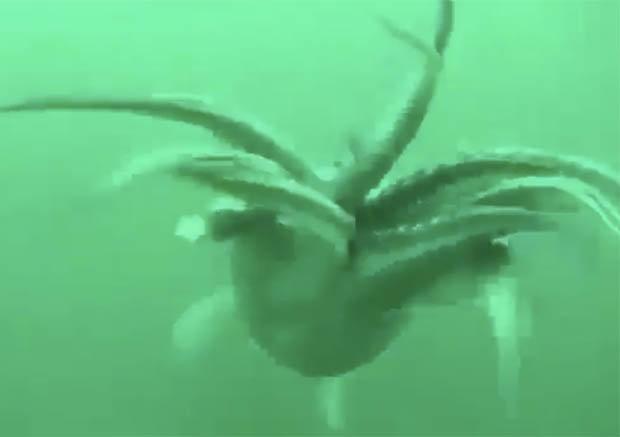 Khám phá biển sâu, không ngờ đụng độ quái vật khổng lồ - 2