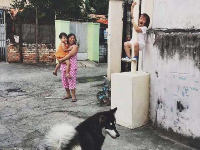 Nếu không bắt chó thả rông, sẽ bắt gặp cảnh này