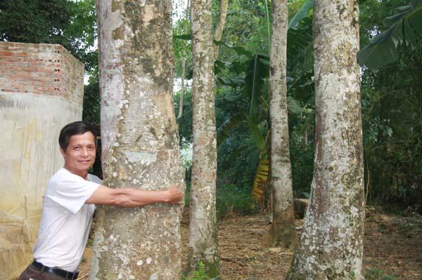 Làm giàu ở nông thôn: Một cây dổi đổi cả...chỉ vàng - 5