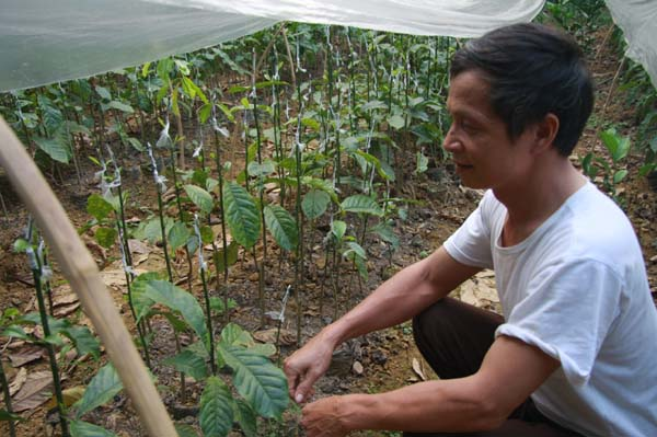 Làm giàu ở nông thôn: Một cây dổi đổi cả...chỉ vàng - 7