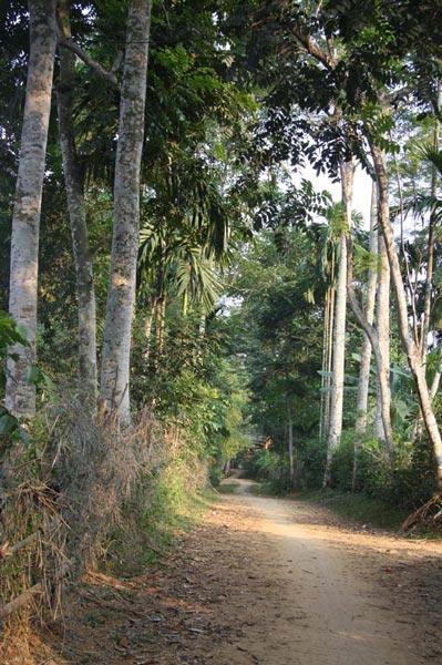 Làm giàu ở nông thôn: Một cây dổi đổi cả...chỉ vàng - 8