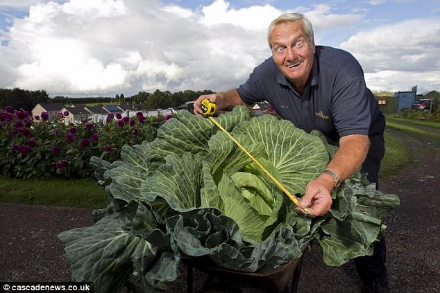 Tự nhiên trồng được bắp cải khổng lồ gấp 50 lần bình thường - 2