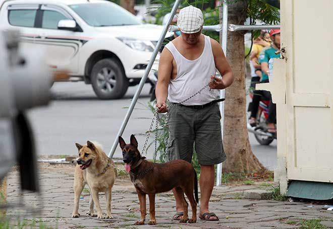 HàNội: Đề xuất xử lý chó thả rông trong vòng 48 giờ - 1