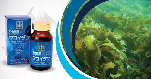 Chống ung thư với Okinawa Fucoidan Nhật chính hãng - 1