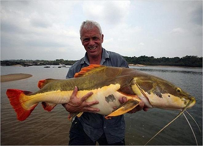 """Bí ẩn khu vực nuôi """"thủy quái"""" râu dài vùng Amazon trên sông Hậu - 8"""