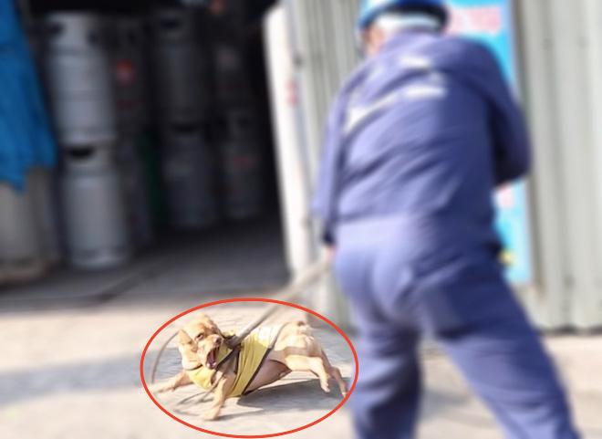 TP.HCM: Chó vô chủ sẽ bị xử lý ra sao sau thời hạn 72 giờ? - 1