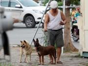 HàNội: Đề xuất xử lý chó thả rông trong vòng 48 giờ