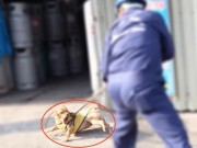 Tin tức trong ngày - TP.HCM: Chó vô chủ sẽ bị xử lý ra sao sau thời hạn 72 giờ?