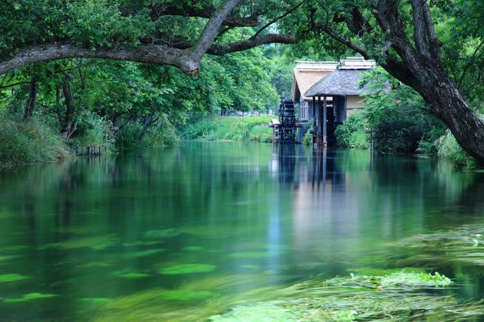 Có một ngôi làng xanh mát, trong lành và bình yên đến lạ ở Nhật Bản - 8