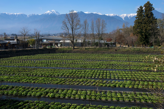 Có một ngôi làng xanh mát, trong lành và bình yên đến lạ ở Nhật Bản - 6