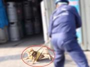 Bắt chó thả rông: Ai có quyền đốt chó?