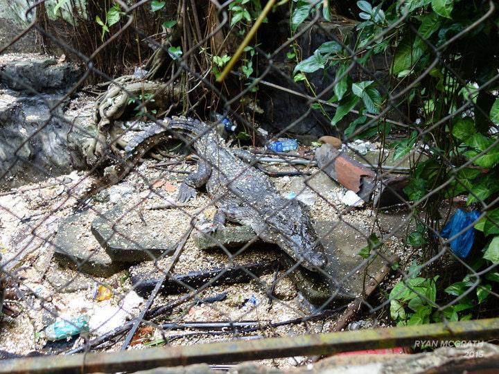 Du khách nước ngoài đổ xô khám phá công viên nước bỏ hoang ở Việt Nam - 8