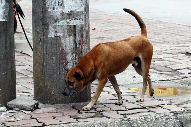 Đã có 56 người tử vong do chó dại cắn - 1