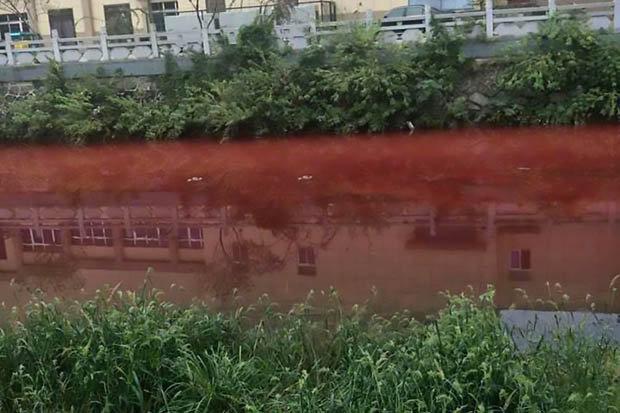 Dòng sông bất ngờ nhuộm đỏ máu tại thành phố Trung Quốc - 3