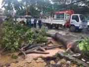 Tin tức trong ngày - Bão số 10 bất ngờ gây mưa lớn, cây đổ, đường ngập ở TP.HCM