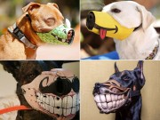 Tranh vui - Không muốn chó bị bắt, hãy đeo ngay rọ mõm