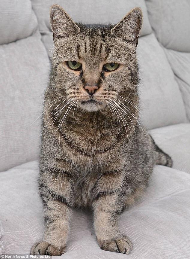 """Cụ mèo già nhất thế giới chết ở tuổi """"144"""" - 1"""