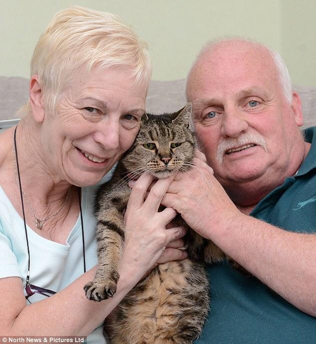 """Cụ mèo già nhất thế giới chết ở tuổi """"144"""" - 2"""