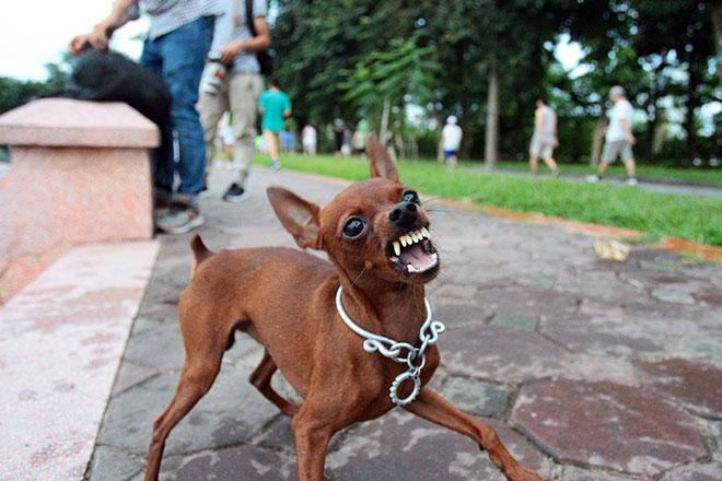 Thương tâm bé 6 tuổi tử vong vì bị chó cắn lại đi khám thầy lang - 1