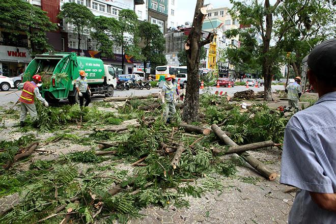"""Ảnh: Chặt hạ, di chuyển 130 """"cụ cây"""" trên đường Kim Mã - 2"""