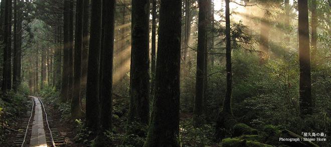 Phát hiện hang động hình trái tim ẩn mình trong khu rừng ngàn năm tuổi - 1